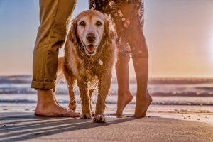 בילוי עם בעלי חיים מועיל לאושר.