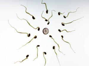 פוריות - זרעים בדרך אל הביצית