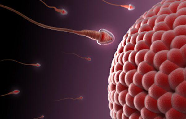טיפולי הזרעה: הזרקת זרע לתוך הרחם
