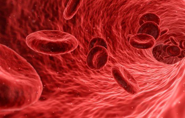 בדיקות דם בהריון: אילו בדיקות? ומהם המדדים הנבדקים? /גילה נחום.