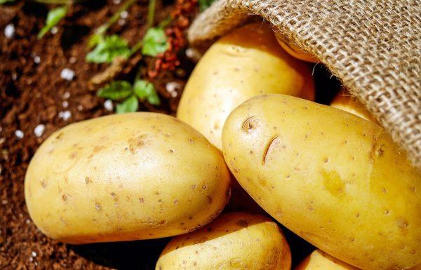 תפוח אדמה ירוק – רעל בתחפושת תמימה. מידע חשוב להורים